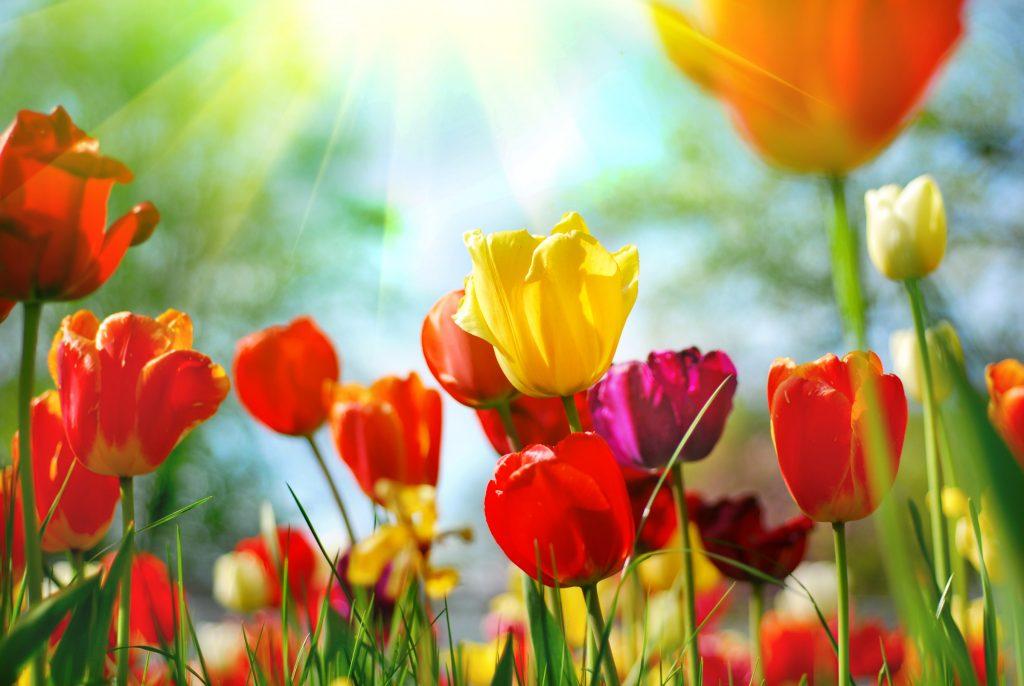 4月の祝日のイメージ