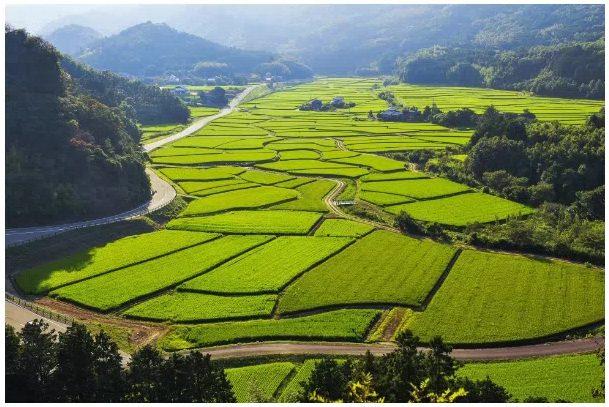 田染小崎地区の水田は、国の重要文化的景観にも選定された。景観保全への賛助、農村と都市との交流促進による相互の活動の活性化を目的とした「荘園領主制度」に取り組んでいる