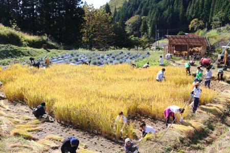 過去の稲刈り体験会の様子