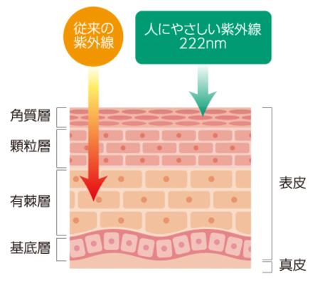 皮膚への紫外線照射イメージ