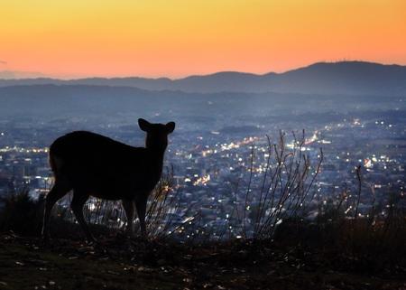 奈良・若草山 写真:小林 修(朝日新聞出版)
