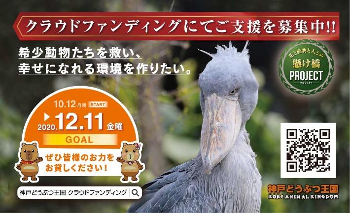 コロナ 王国 神戸 どうぶつ 神戸どうぶつ王国、20日から営業再開 新たな動物もお披露目