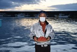 日本唯一「桜えび」の秋漁がスタート!
