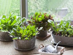 『プロが教える家庭菜園のコツ』シリーズ《VOL 9》 家庭菜園のよくある失敗の原因とポイントについて