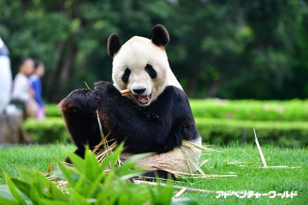 9月14日(木)お父さんパンダ「...