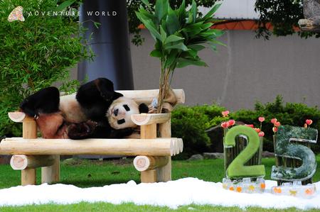 2頭のジャイアントパンダの誕生日をお祝いします