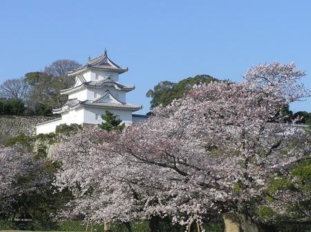 明石城と桜