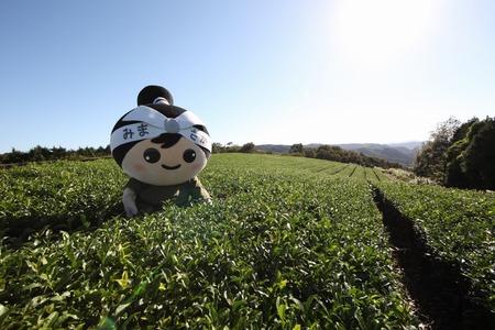 美作の茶畑