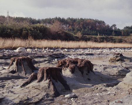 企画展示『化石林 ねむる太古の森』7月21日より開催