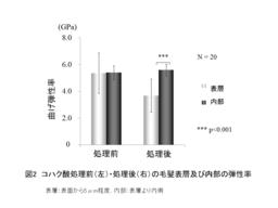 図2 コハク酸処理前後の毛髪表層および内部の弾性率