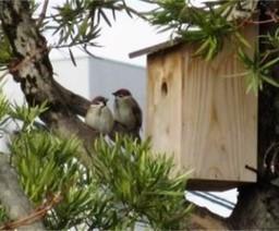 事業場内の神社に設置した巣箱