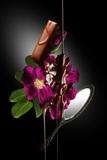蕾~ハマナスの花のように~