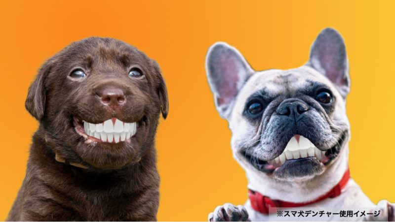 3Dプリンターで製作する愛犬専用入れ歯「スマ犬(イヌ)デンチャー」を発売 ...