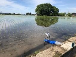 水田farmoと給水ゲート